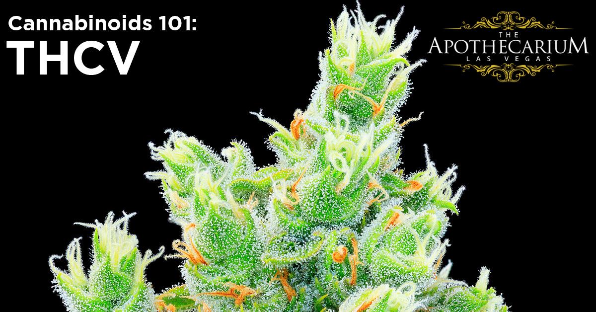 the apothecarium las vegas a recreational and medical marijuana dispensary discuss thcv a cannabinoid found in cannabis