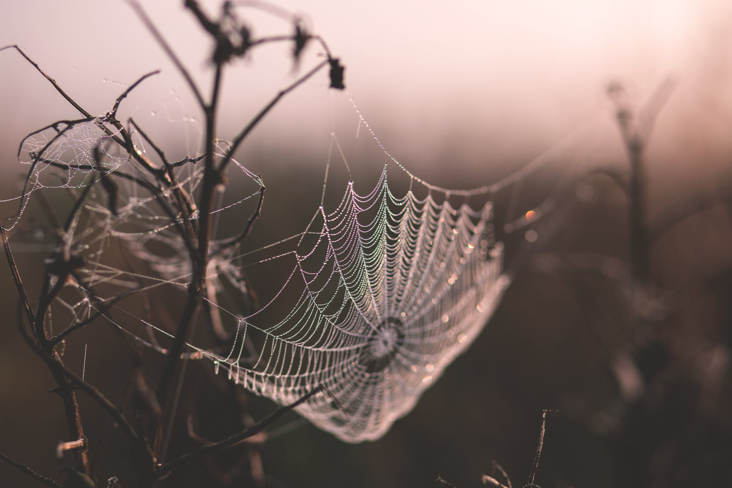 Cobwebs. Delicate. Strong. Layered. Remove non-essential.