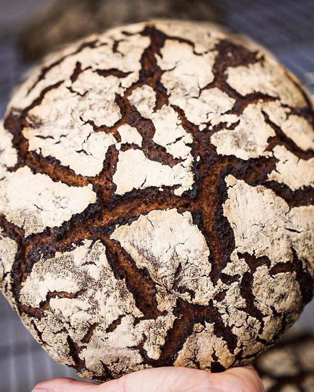 100% rye, 100% whole grain, 100% naturally leavened. I love how each loaf of this bread takes on its own character. The baker can coax the loaf in a general direction but it's ultimately up to the grain and the fermentation to decide on its final form.
