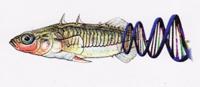 Stickleback Adaptive Genome Browser   http://sticklebrowser.stanford.edu/