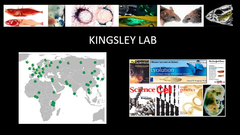 Kingsley Lab