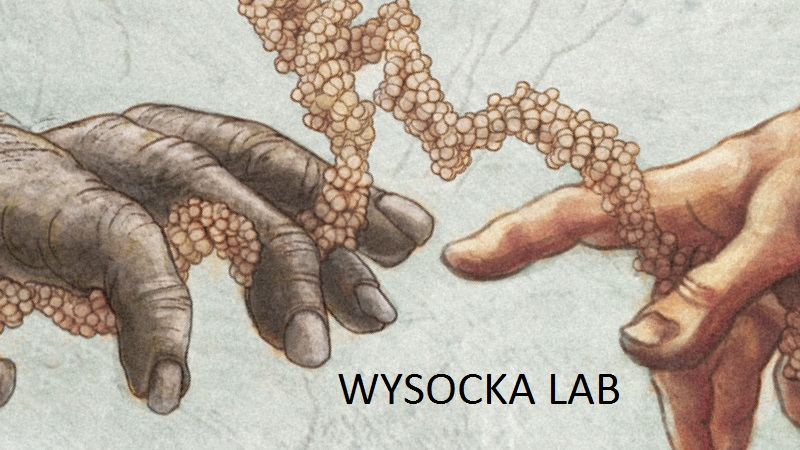 Wysocka Lab