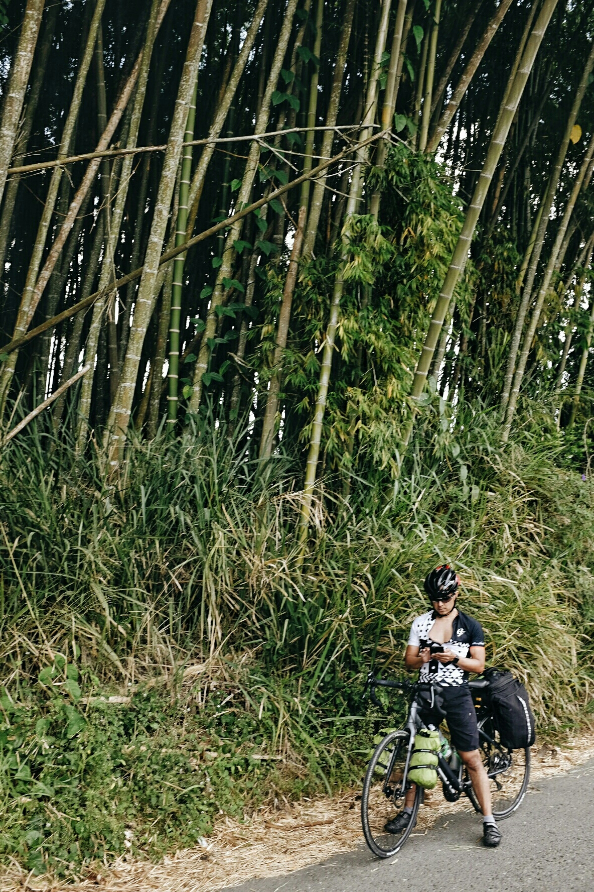 Guadua is a kind of bamboo. It grows extremely fast and is used in construction. Just don't touch it without gloves!