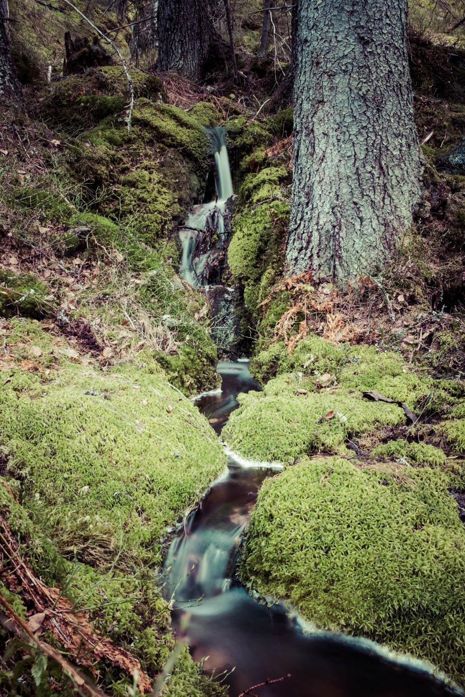 Naturen er helt urørt i dalsiden ned mot Flatdal.