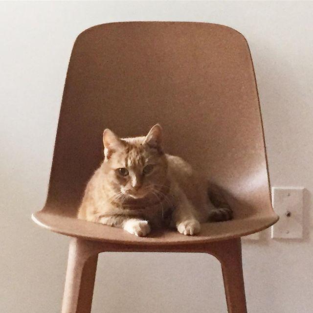 Twins #cat #chair #ikea #twins