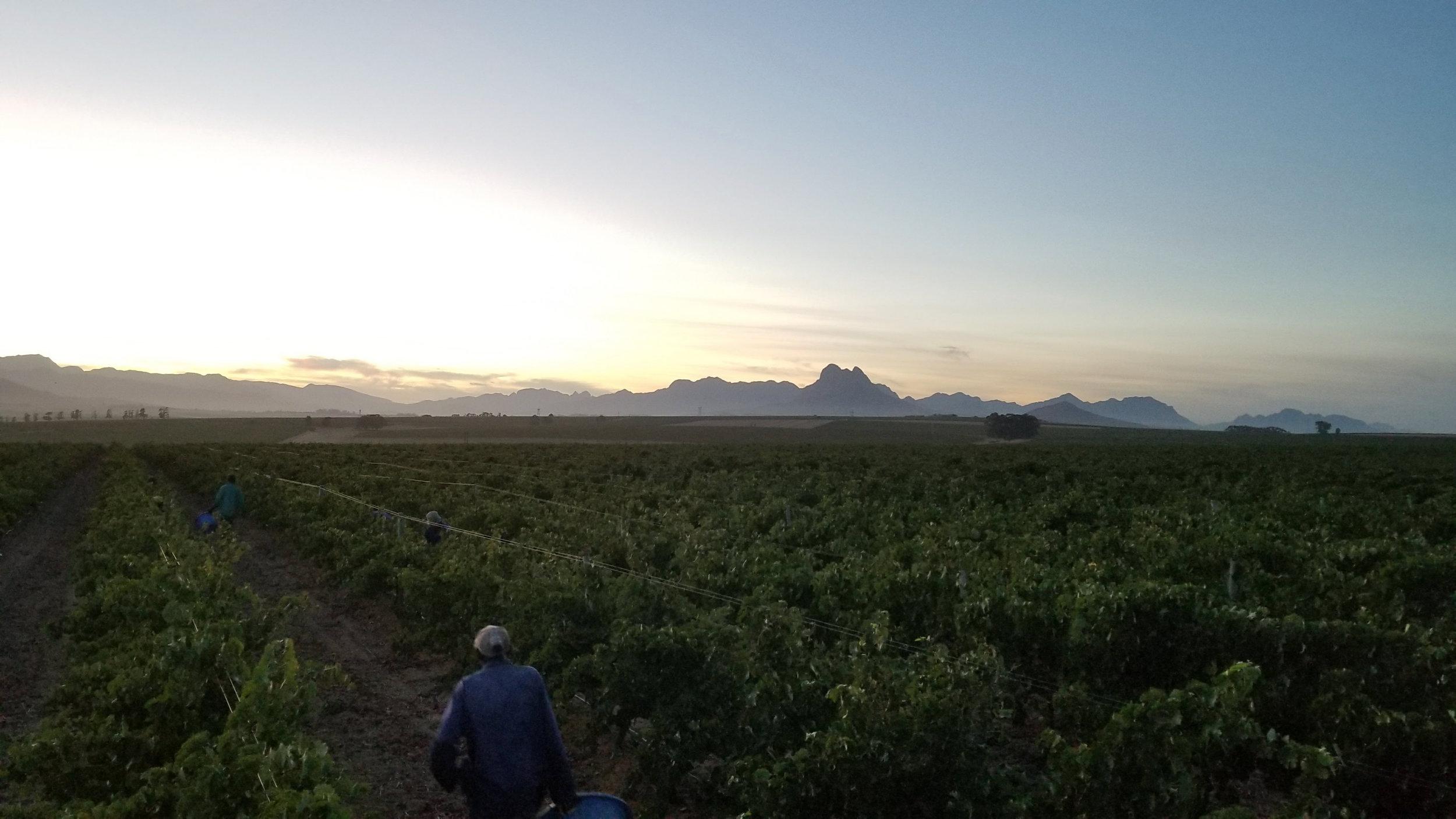 Sunset on Wine Farm-South Africa.jpg