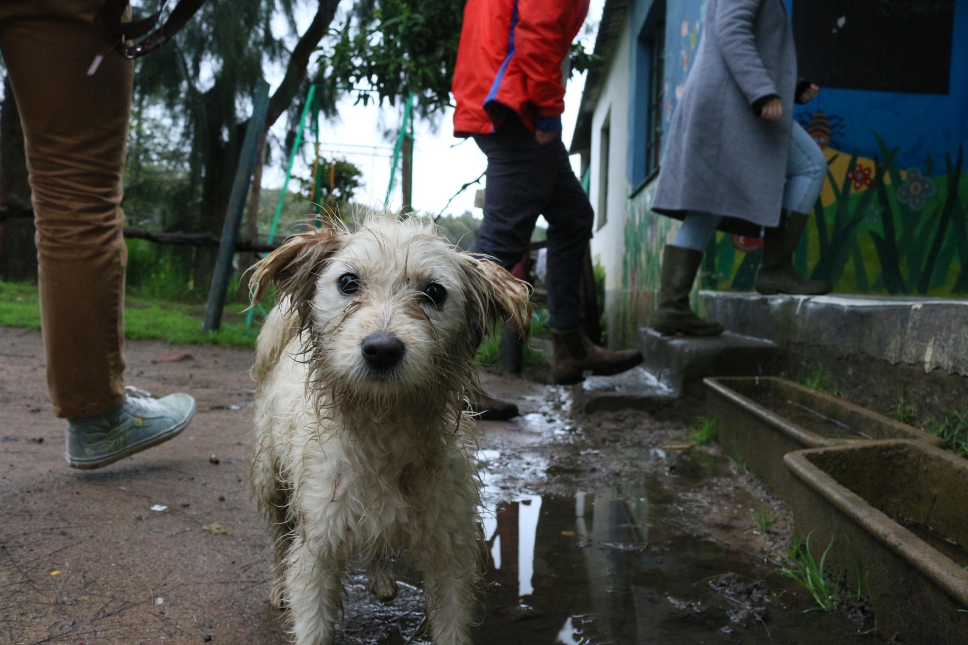 Muddy dog at Pebbles Project Flenterskloof