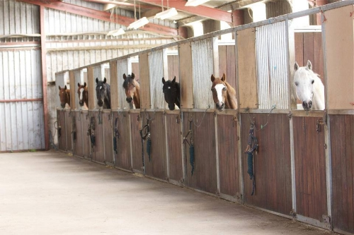 stallions+in+stables.jpg
