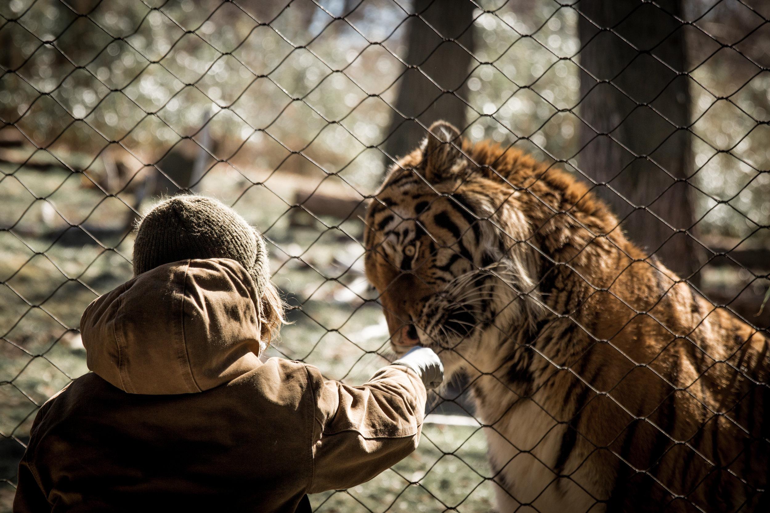 Zoo-39.jpg