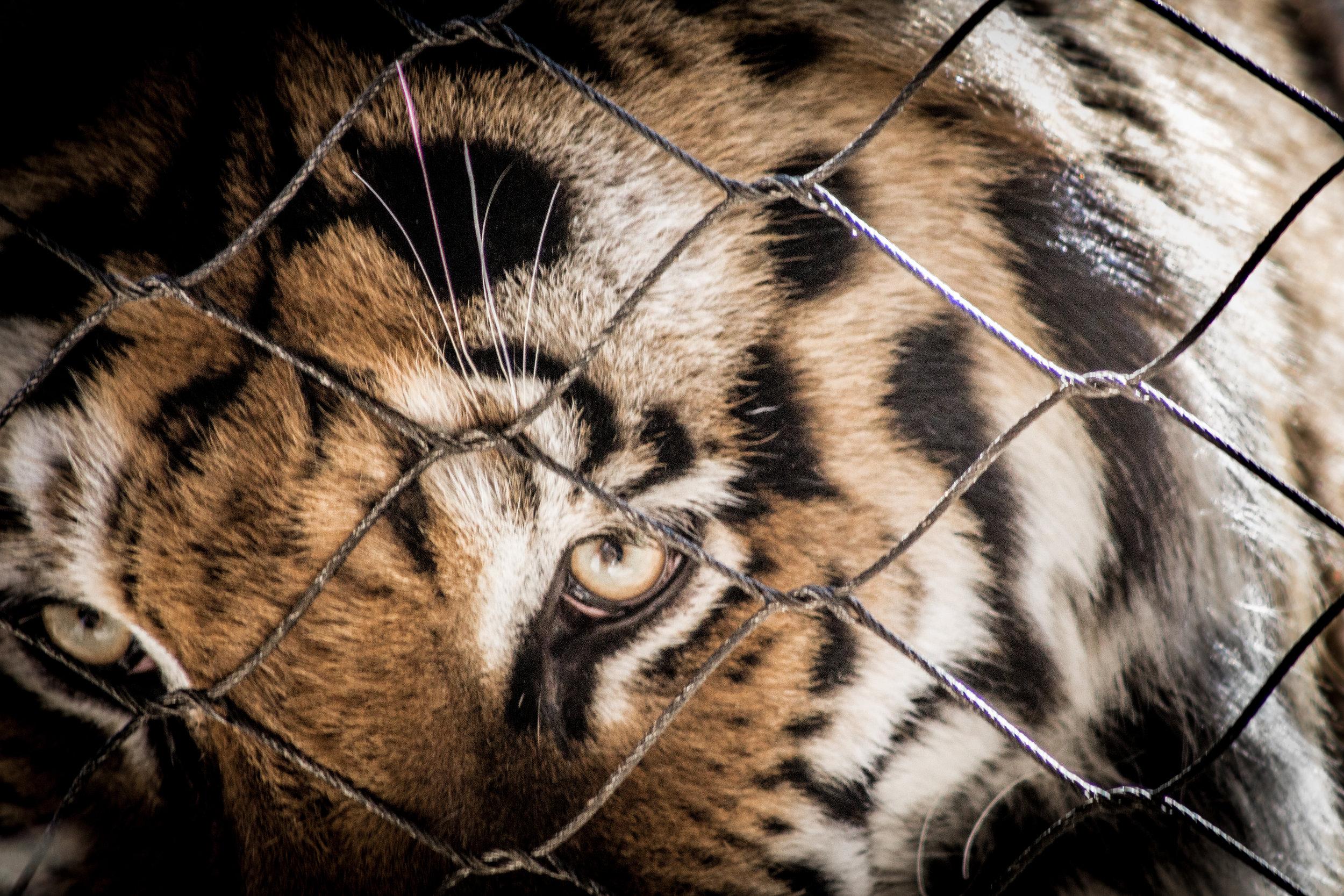 Zoo-53.jpg
