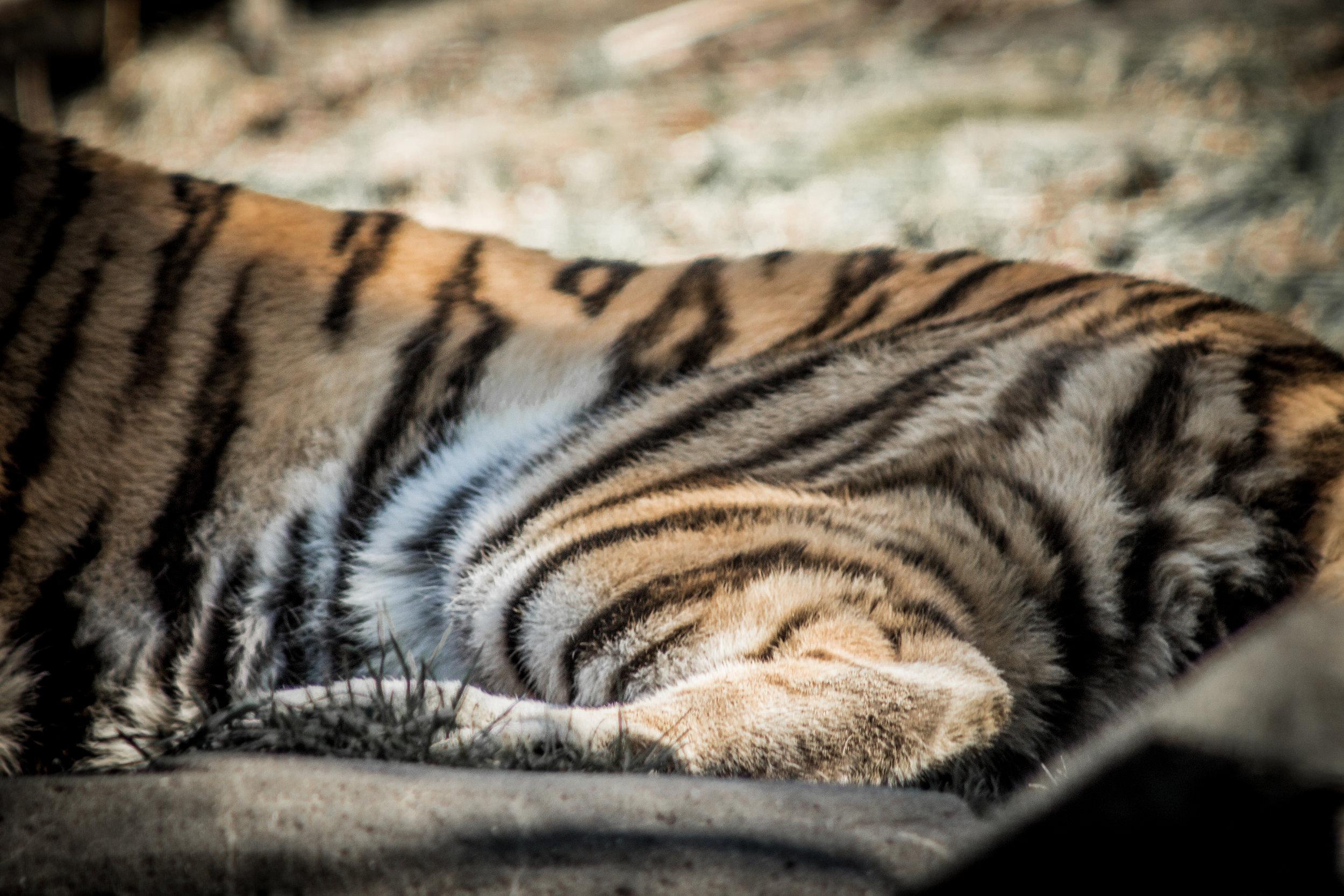 Zoo-61.jpg