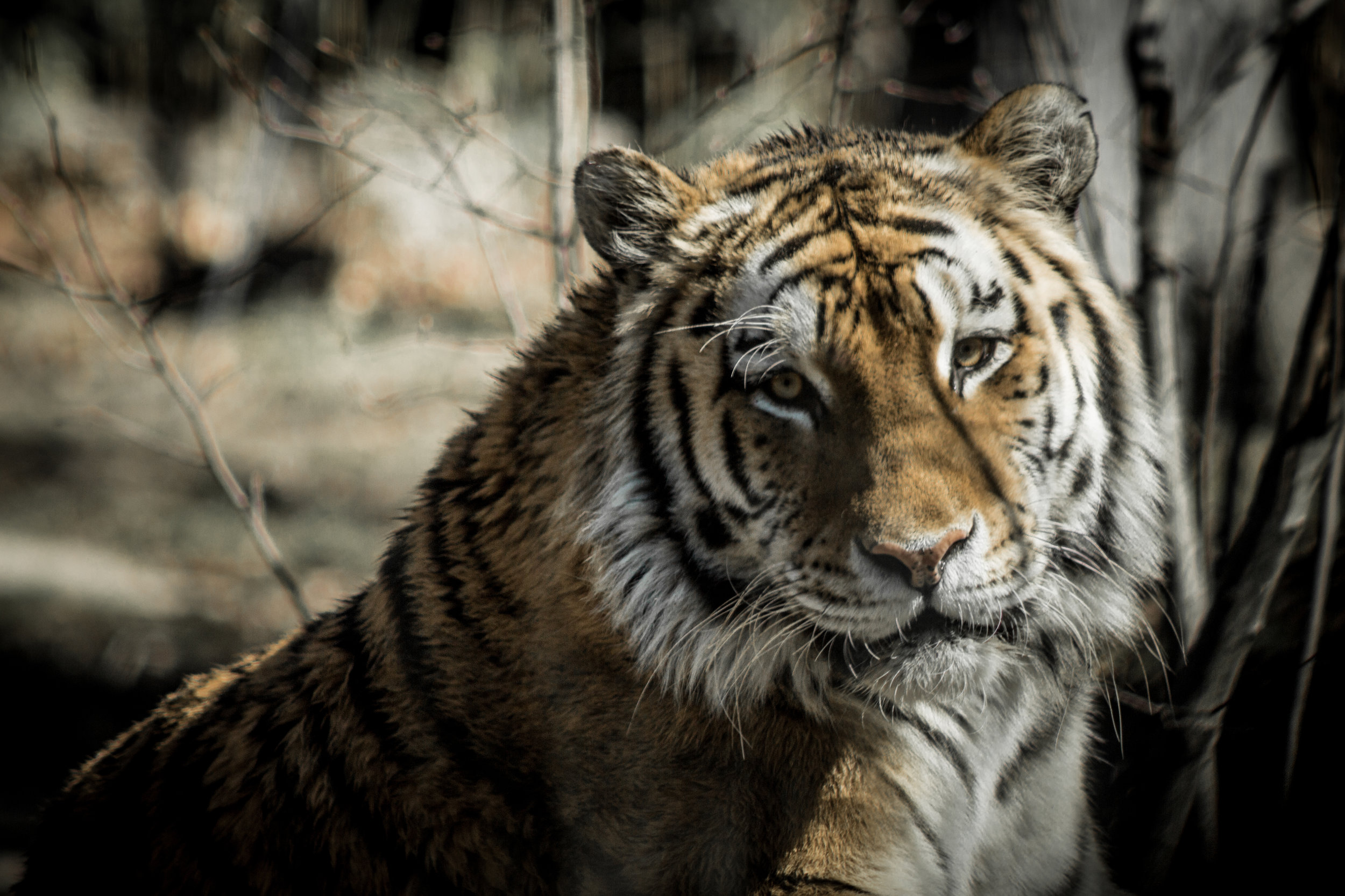 Zoo-65.jpg