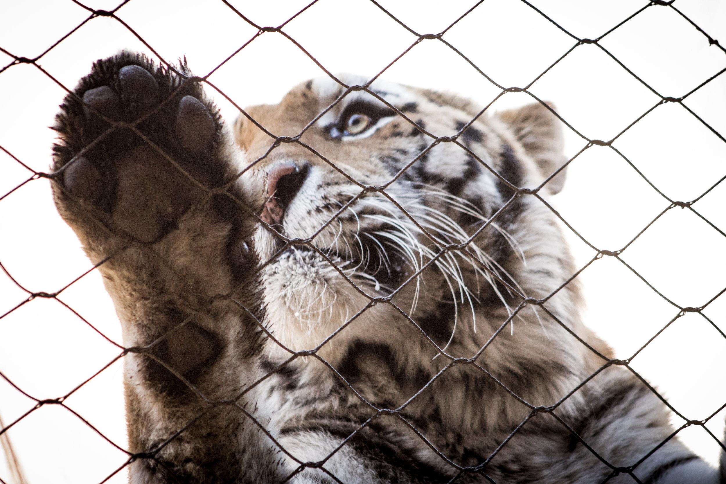 Zoo-74.jpg