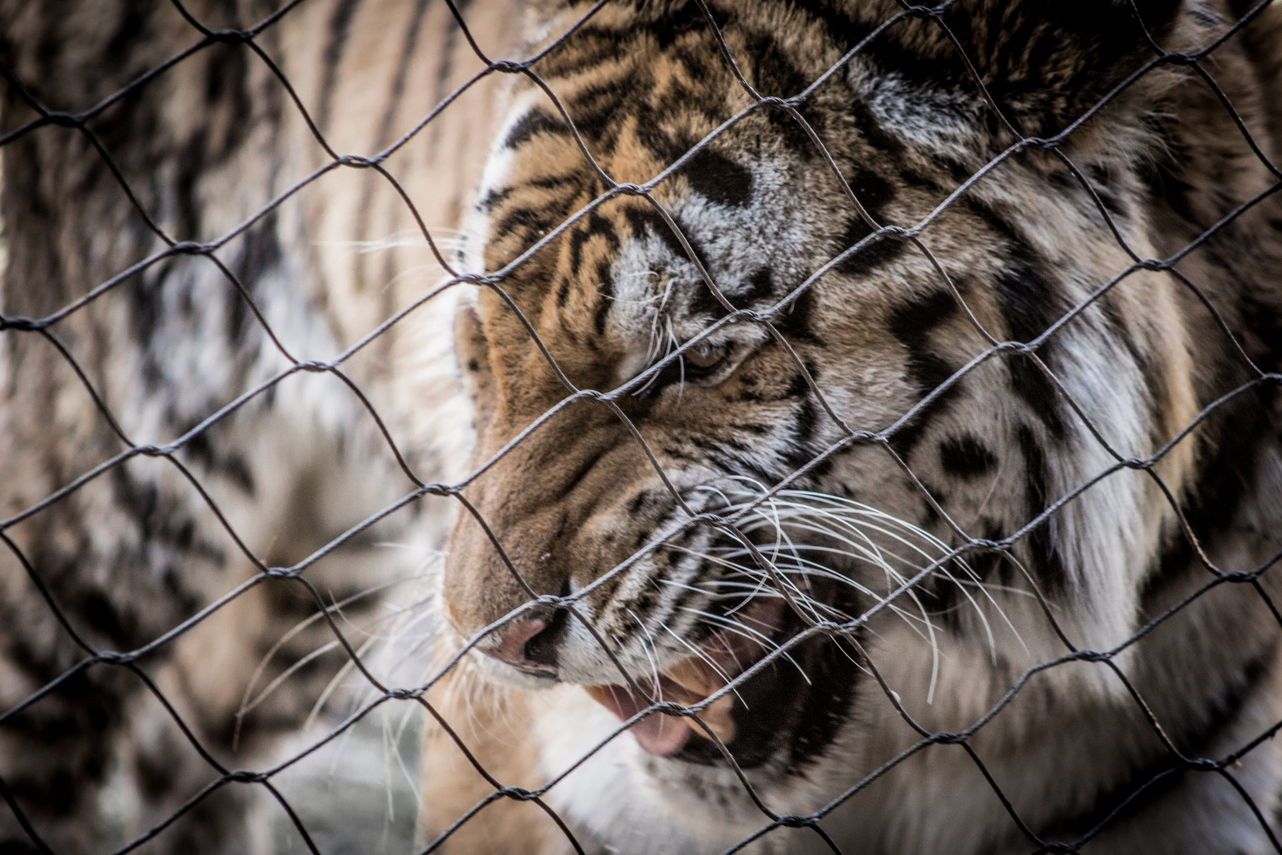 Zoo-75.jpg