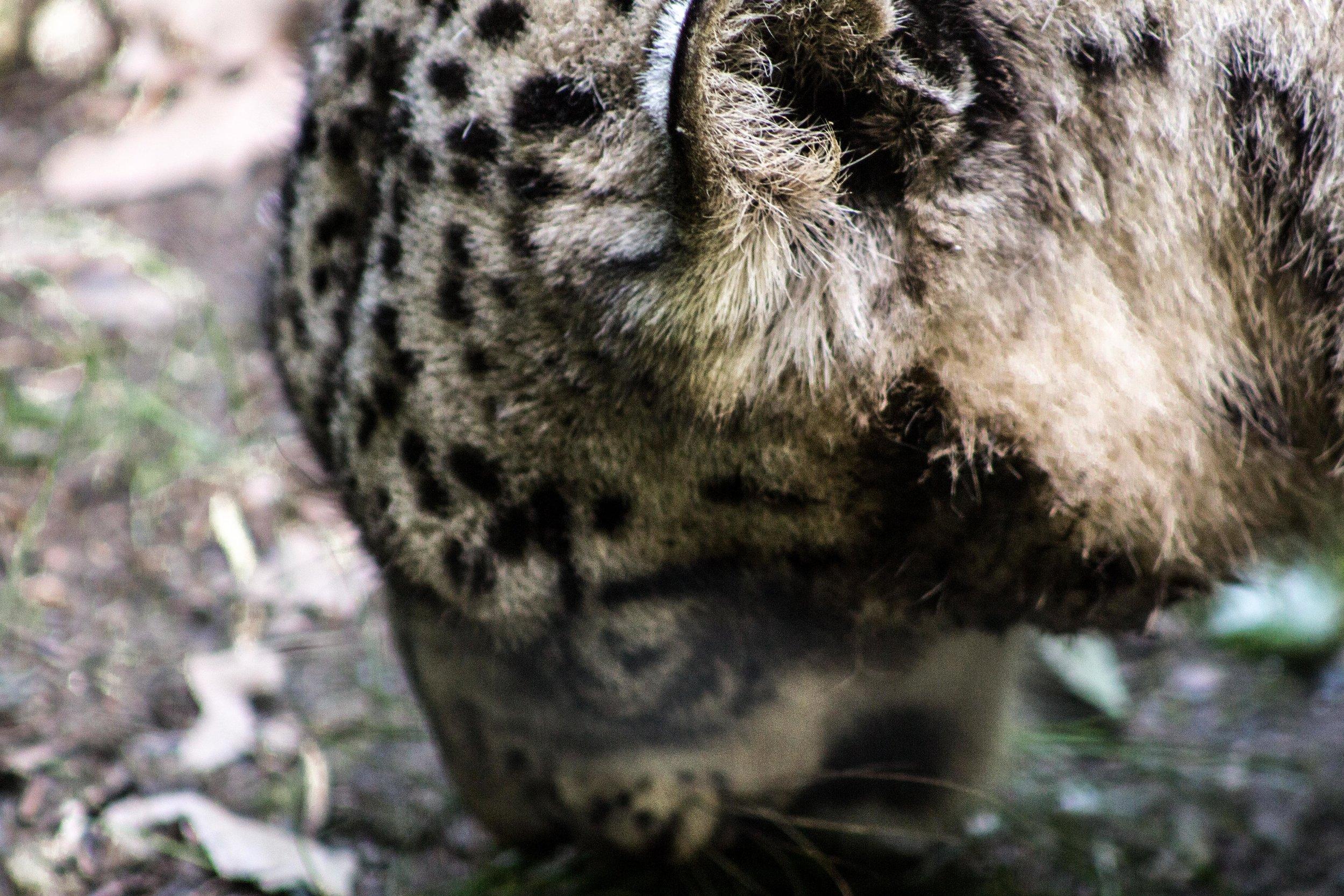 Zoo-11.jpg