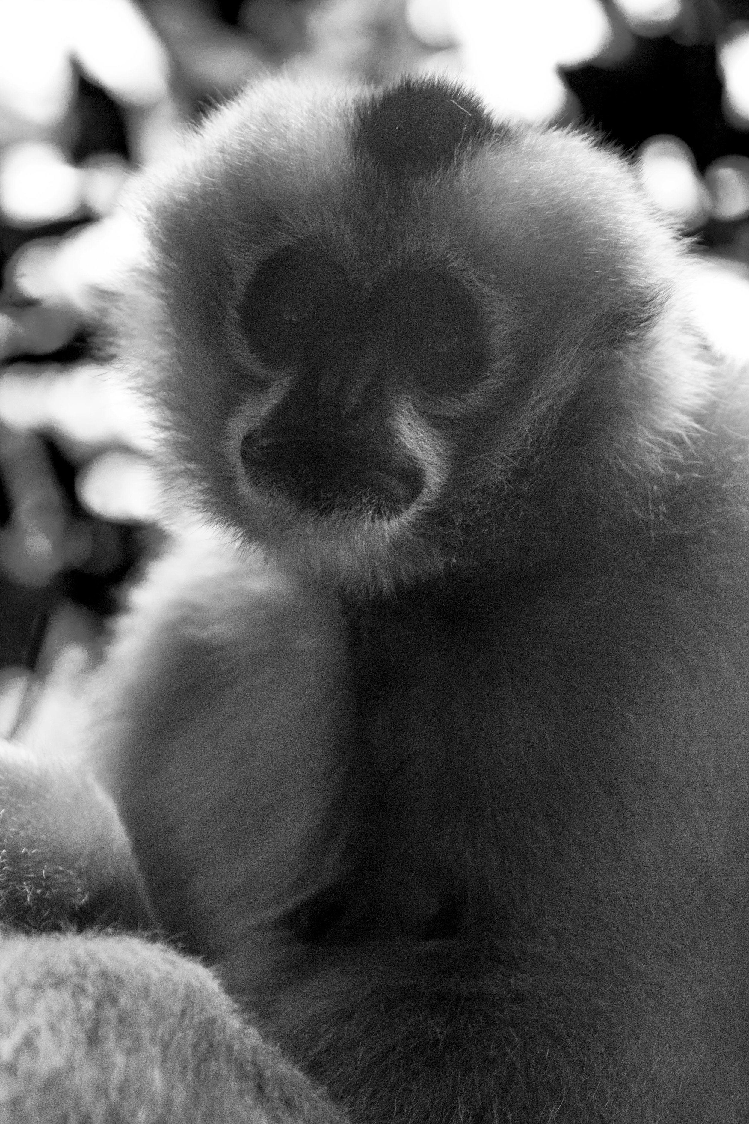 Zoo-38.jpg