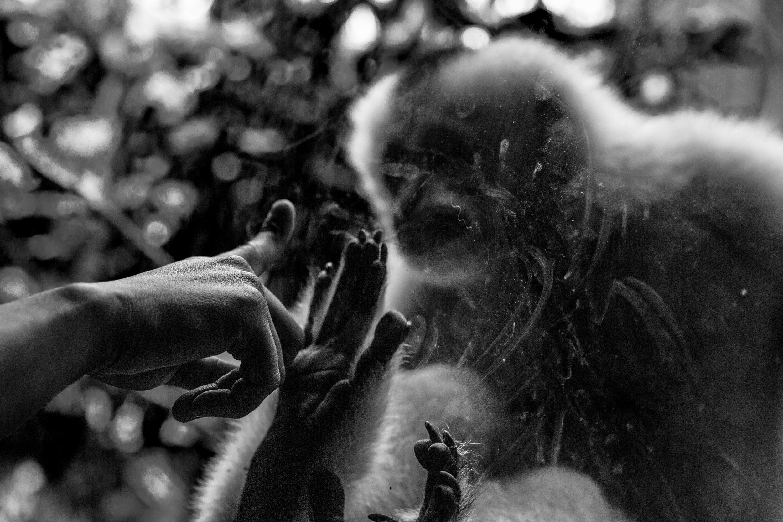 Zoo-36.jpg