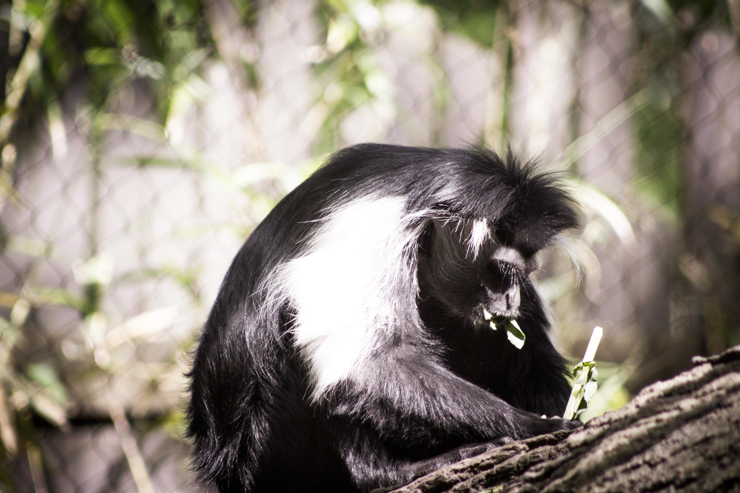 Zoo-49.jpg