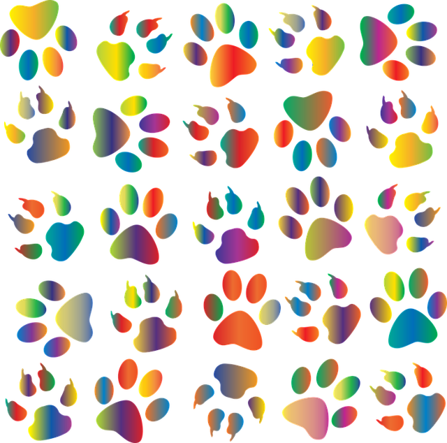 colorful-1353143_640.png