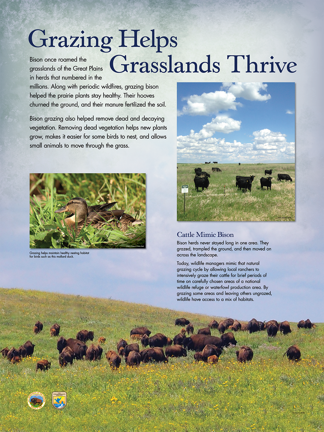 "Grazing Helps Grasslands Thrive ( 36"" x 48"" )"