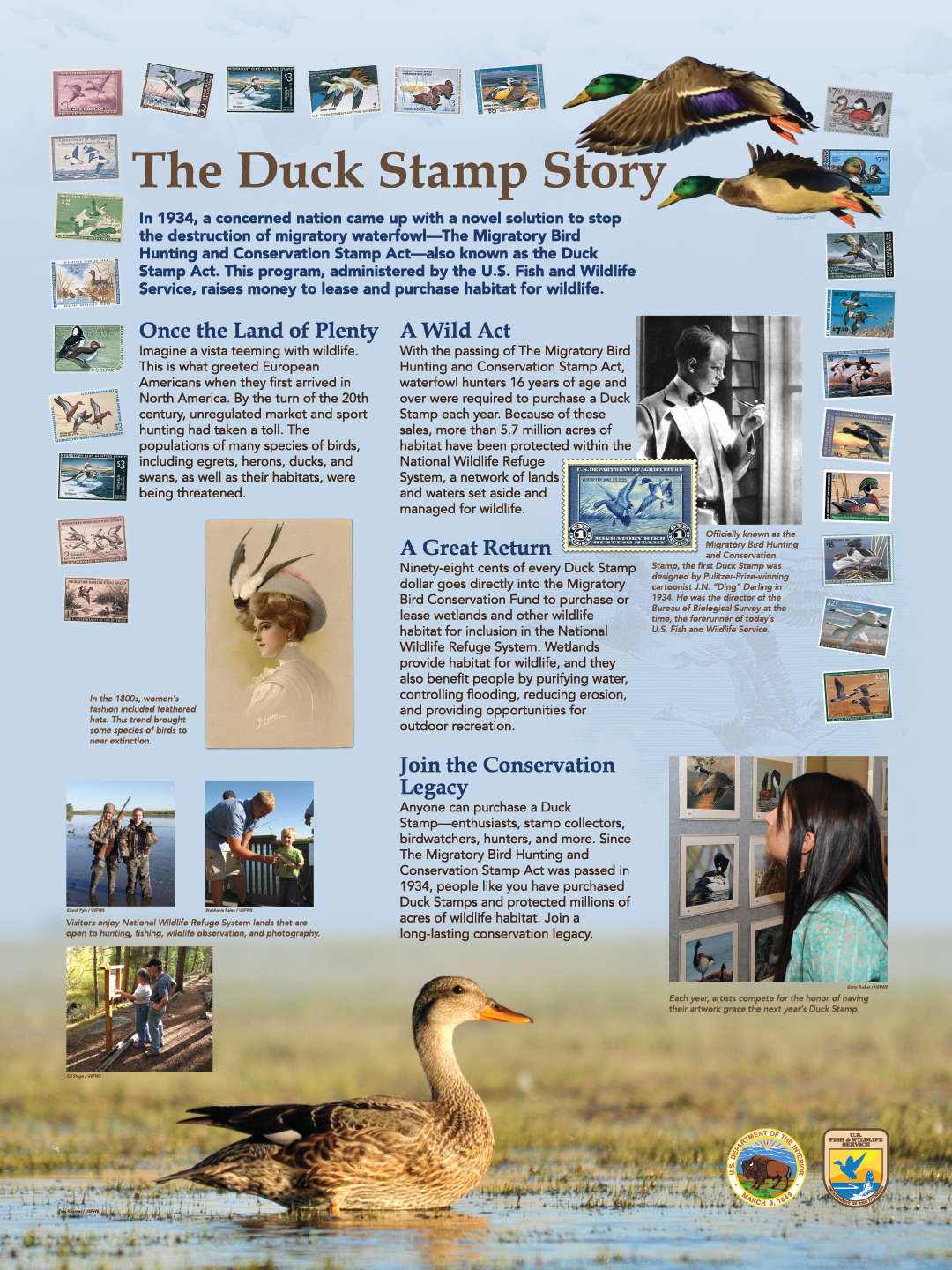 "The Duck Stamp Story ( 36"" x 48"" ) (designed by Wilderness Graphics)"