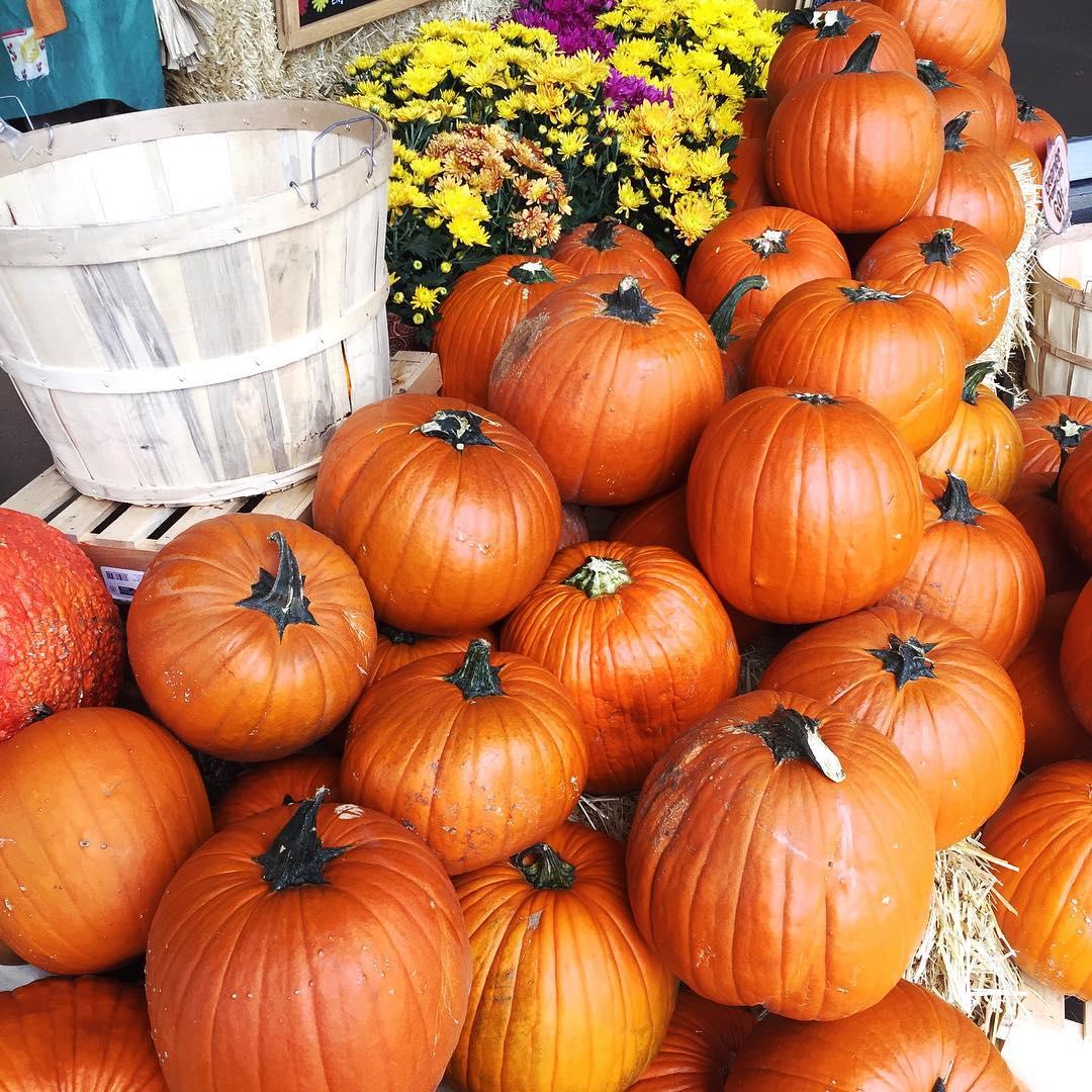 trader-joes-pumpkins