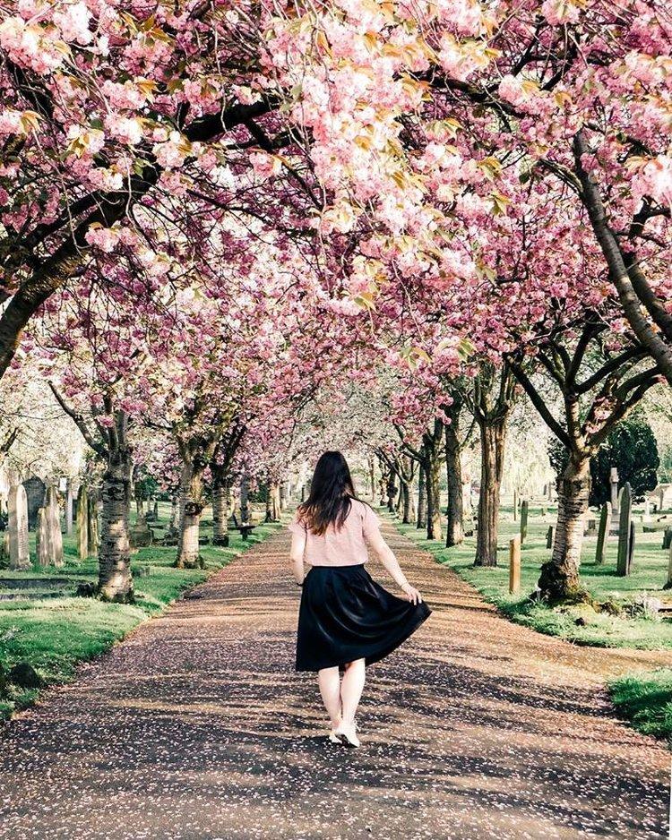 london-cherry-blossoms.jpg
