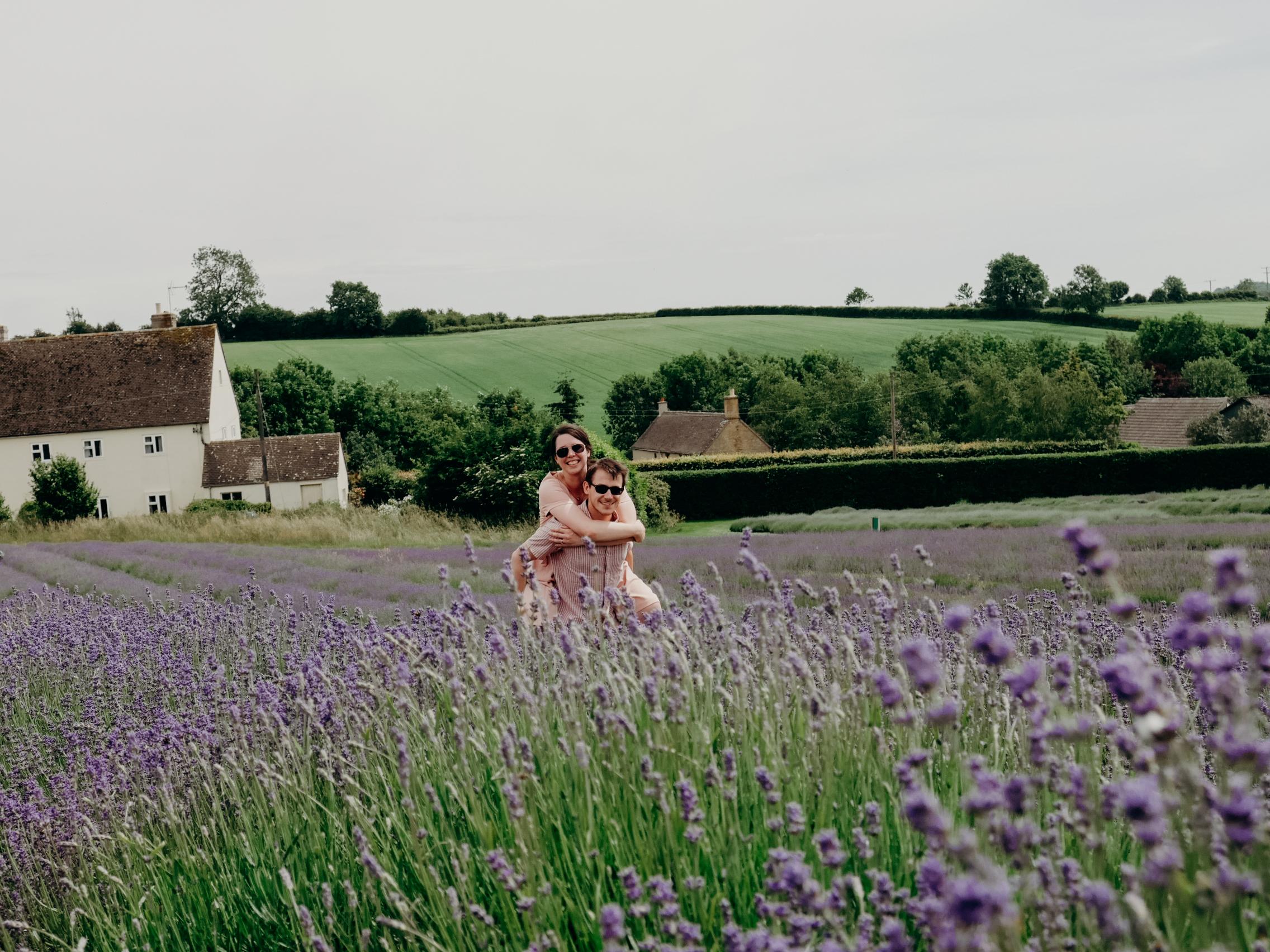 cotswolds-lavender