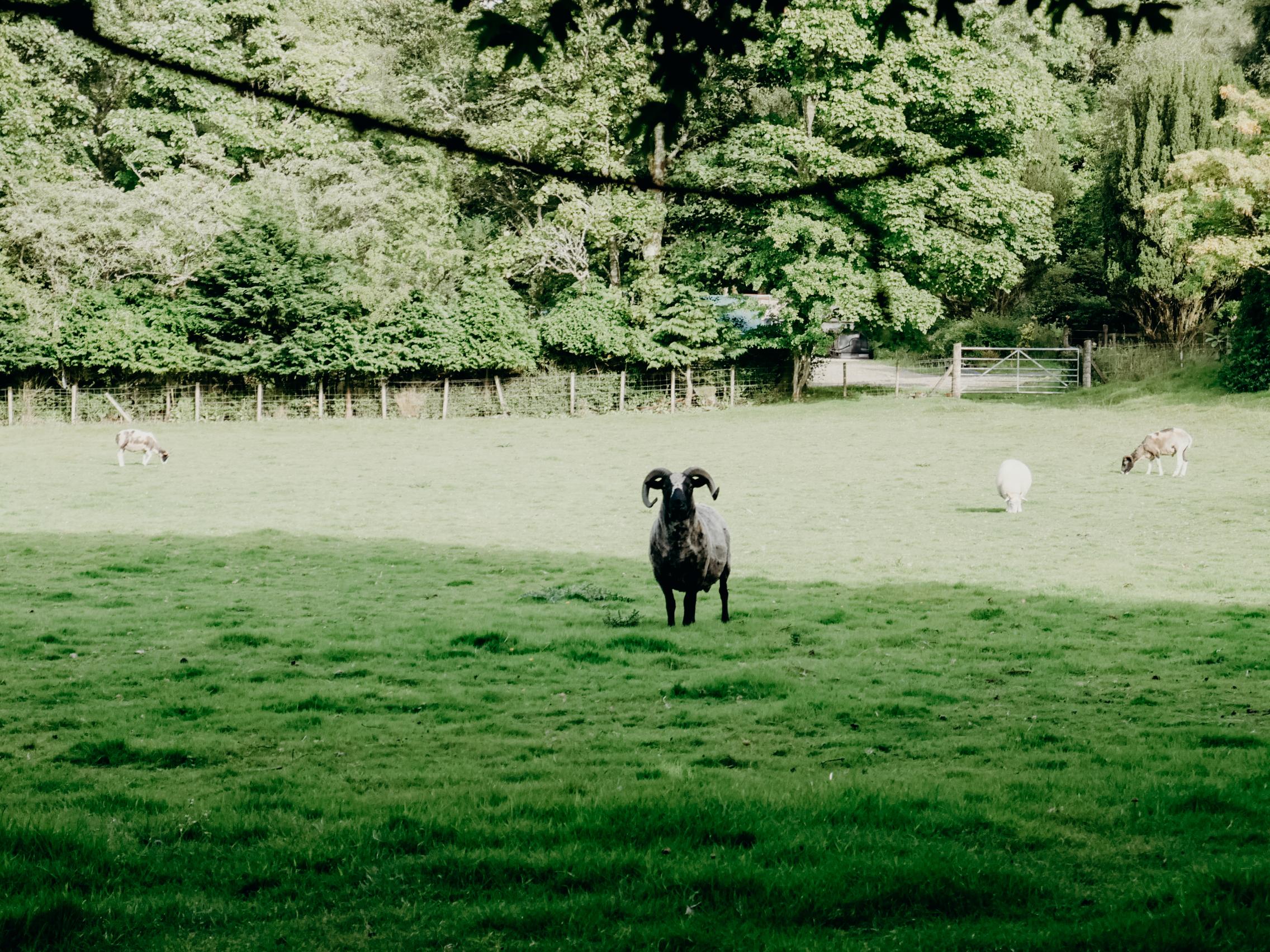 Balinakill Country House Argyll, Scotland
