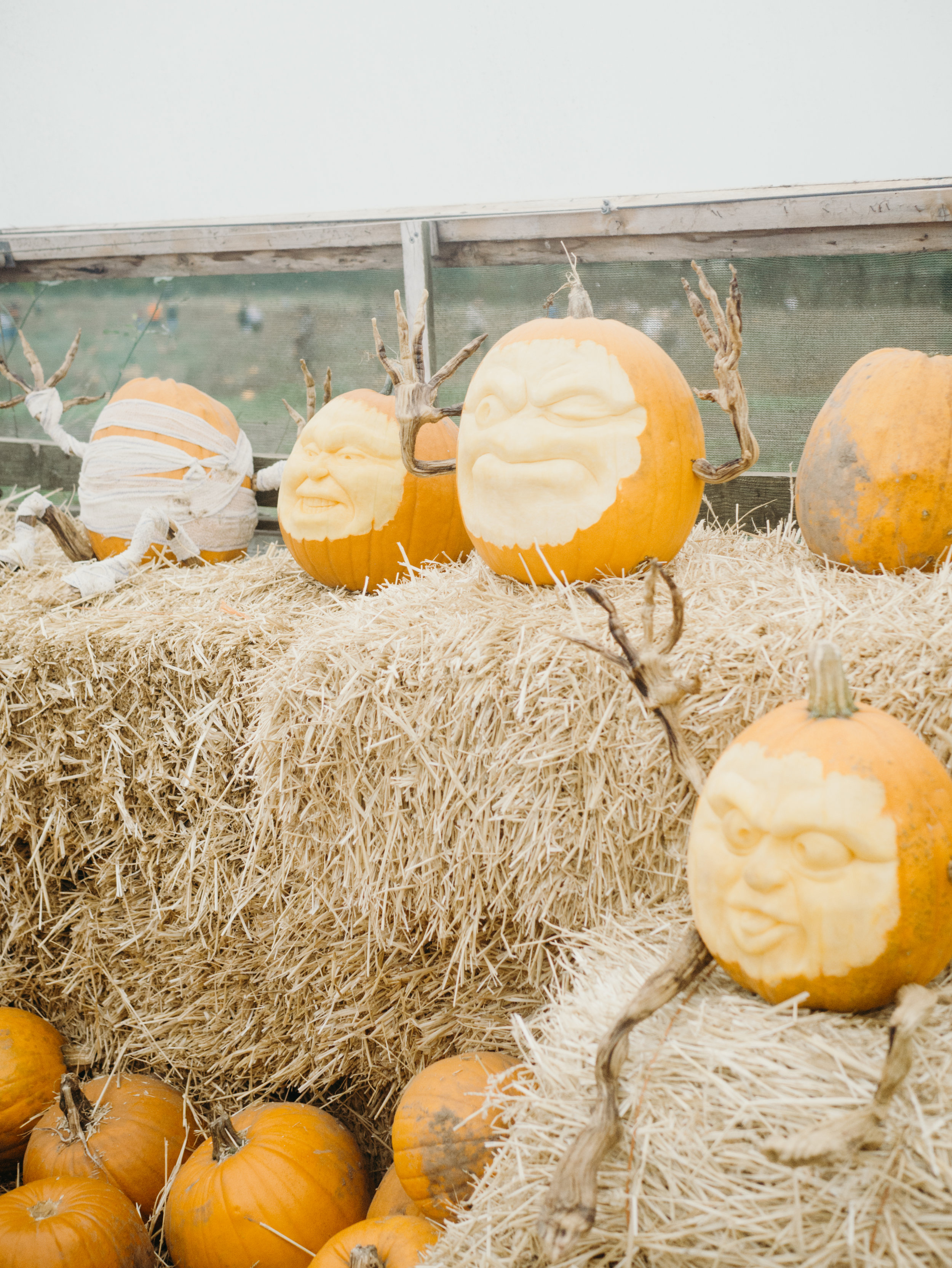 The Pumpkin Patch at Essington Farm