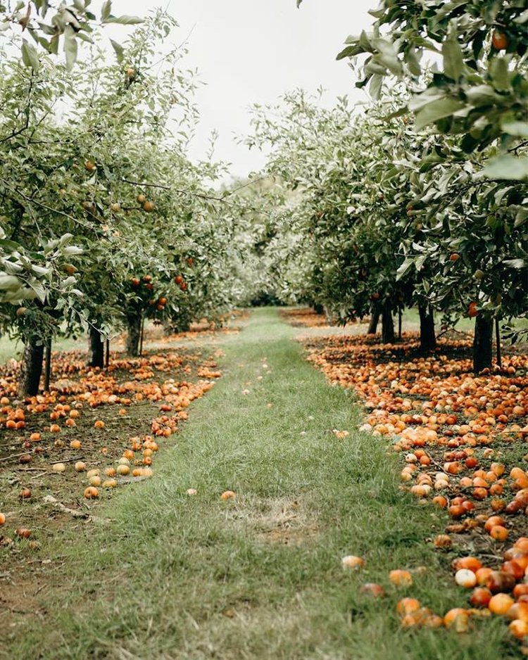 2019 Autumn Bucket List - Visit an Apple Orchard