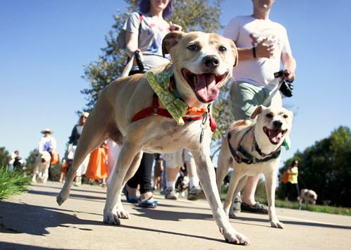 Strut-Your-Mutt-dog-walk-fundraiser-152.jpg