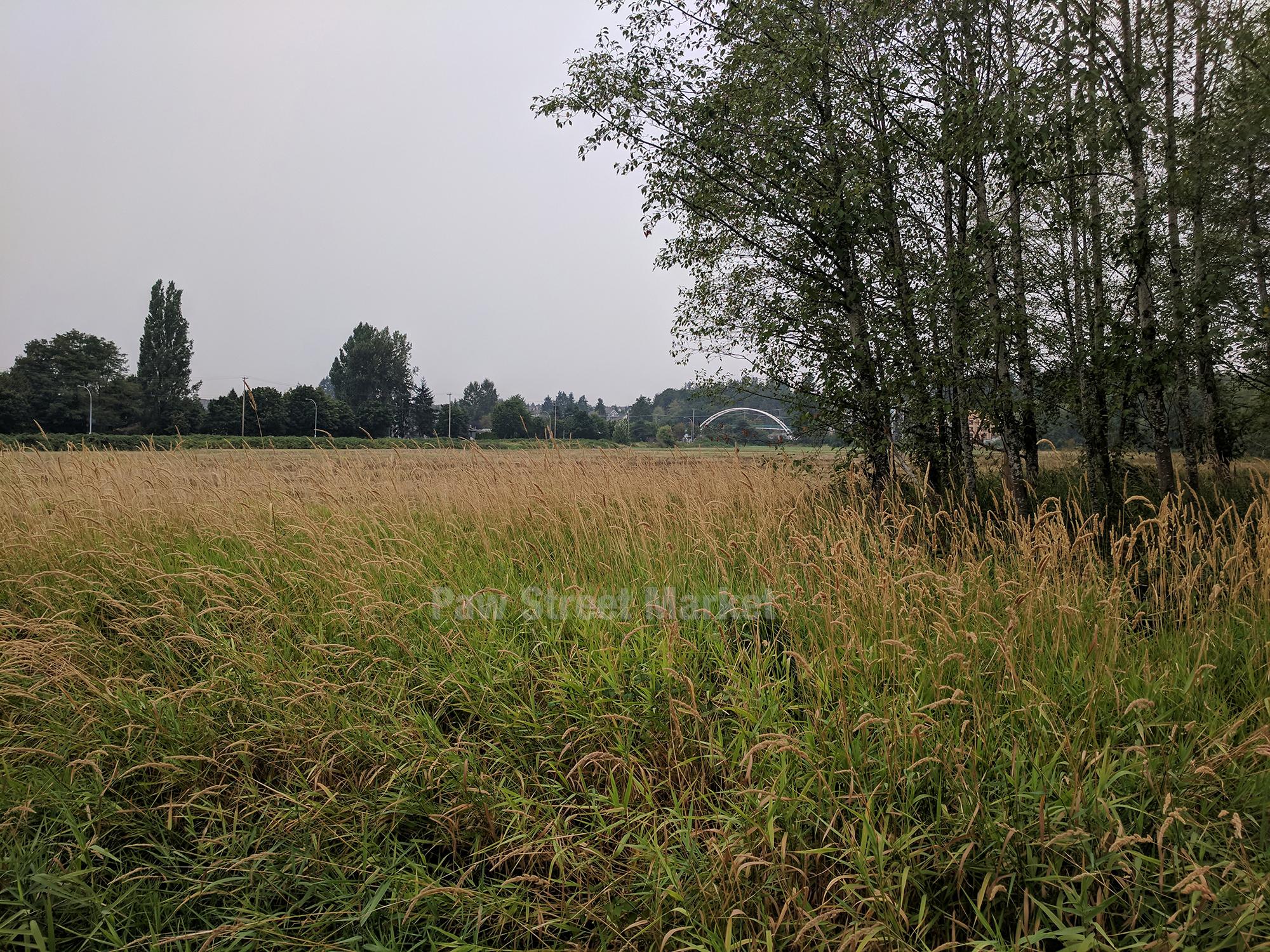 Willoughby Field 4.jpg