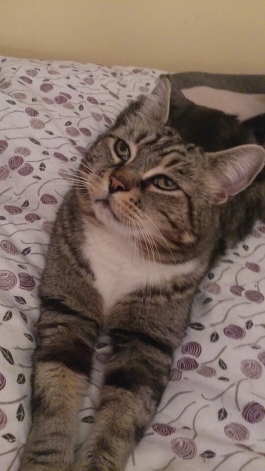 16-cat.jpg