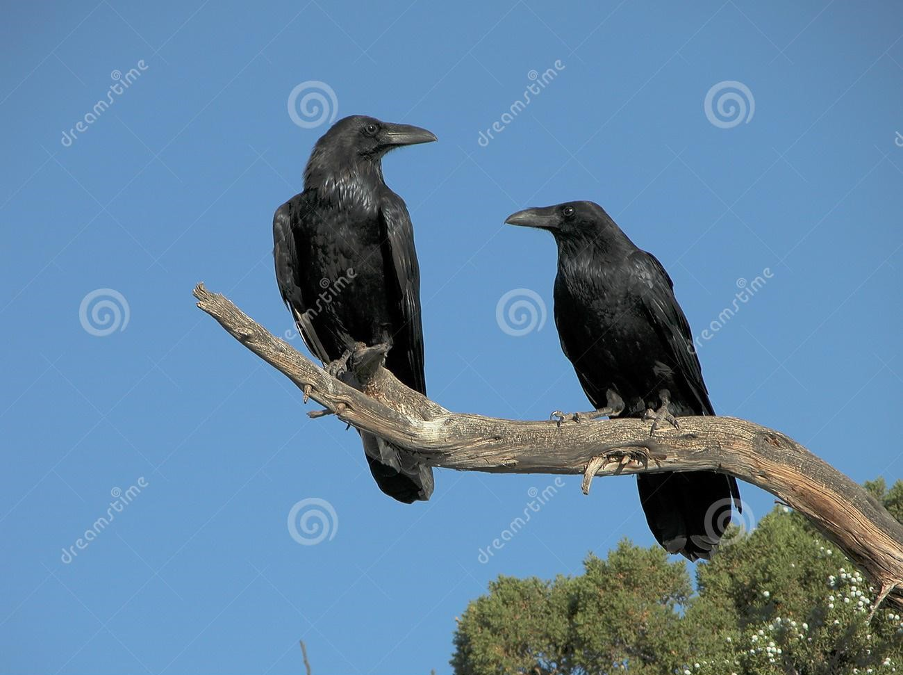 the-day-the-trees-crows1.jpg