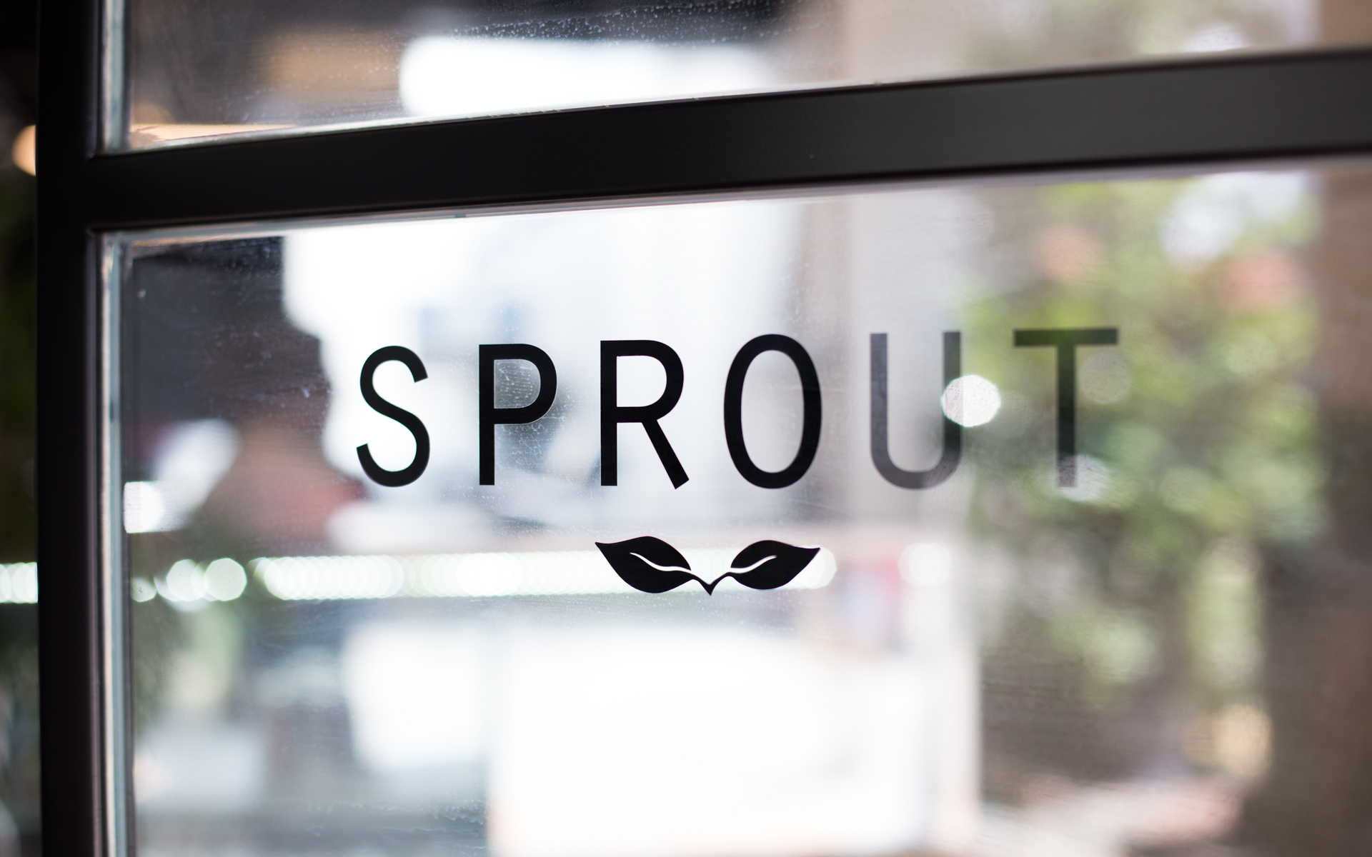 SPROUT1.jpg