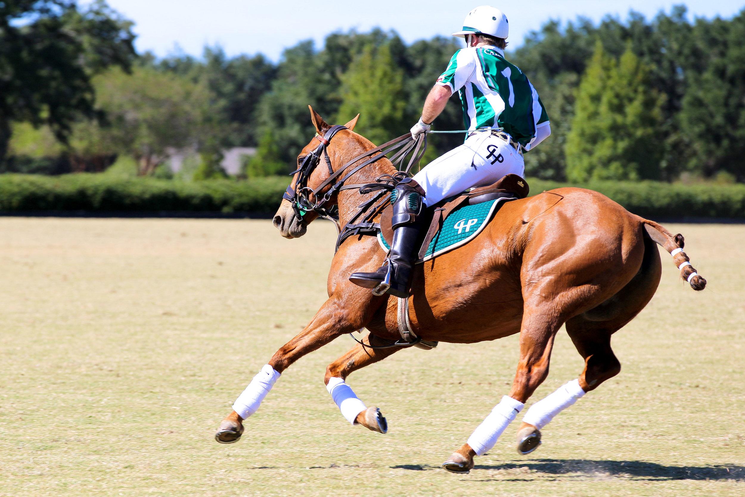 fashion blogger lcb style horse polo fall fashion (6 of 7).jpg