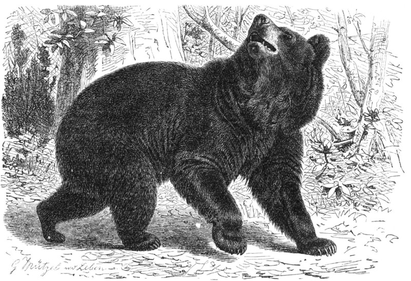 Illustration by Gustav Mützel