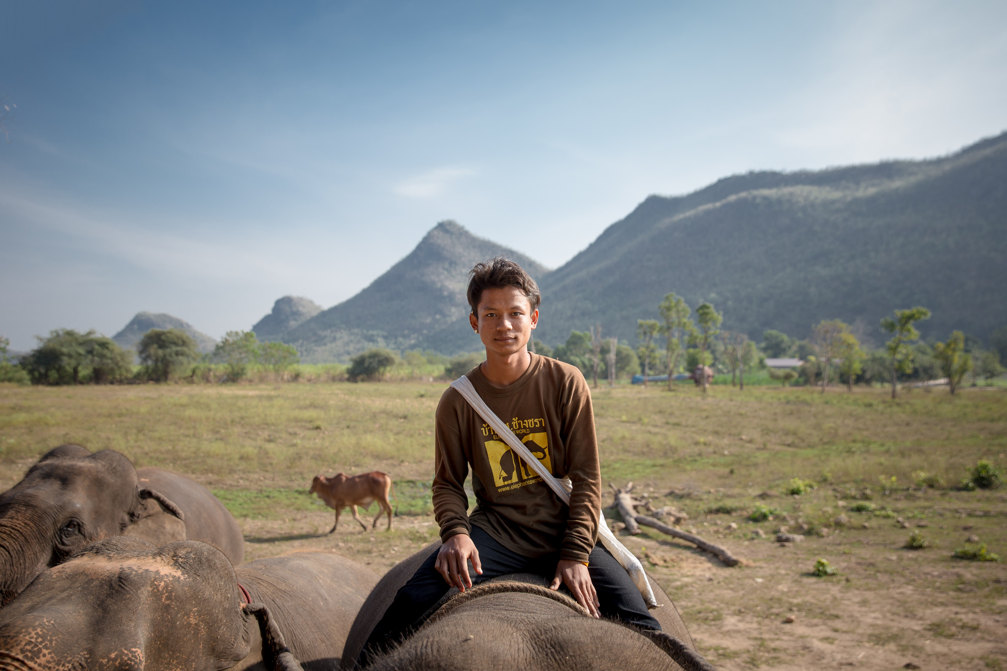A mahout on an elephant's back