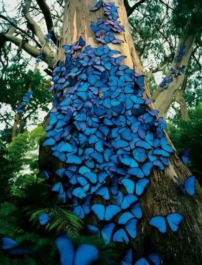 2bbluebutterflies.jpg