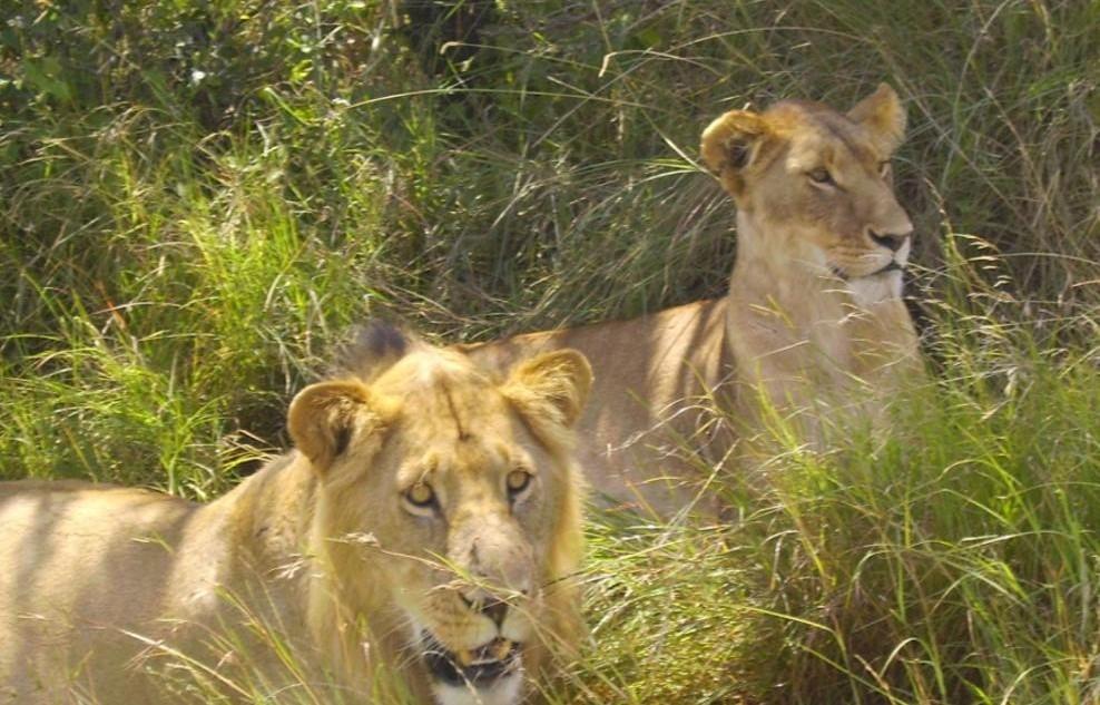 African Wildlife is a Treasure