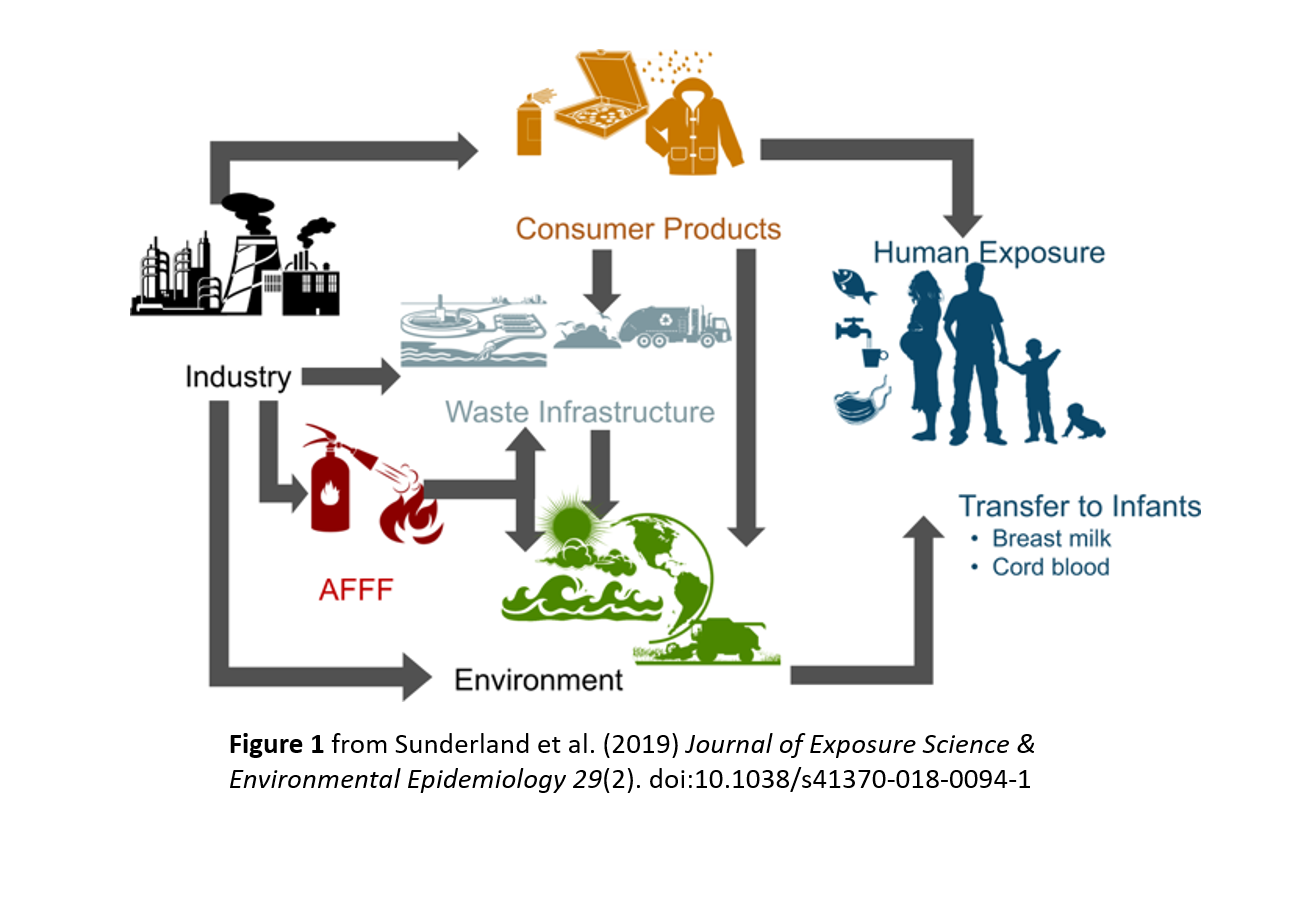 Potential major exposure pathways of PFAS to humans.   Sunderland et al. (2019)
