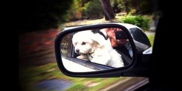 Saffie on the move