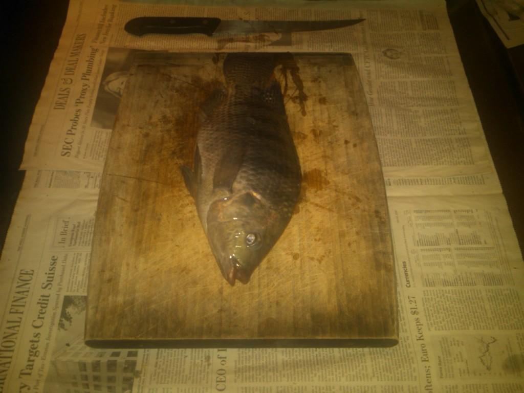 Freshly caught Tilapia!