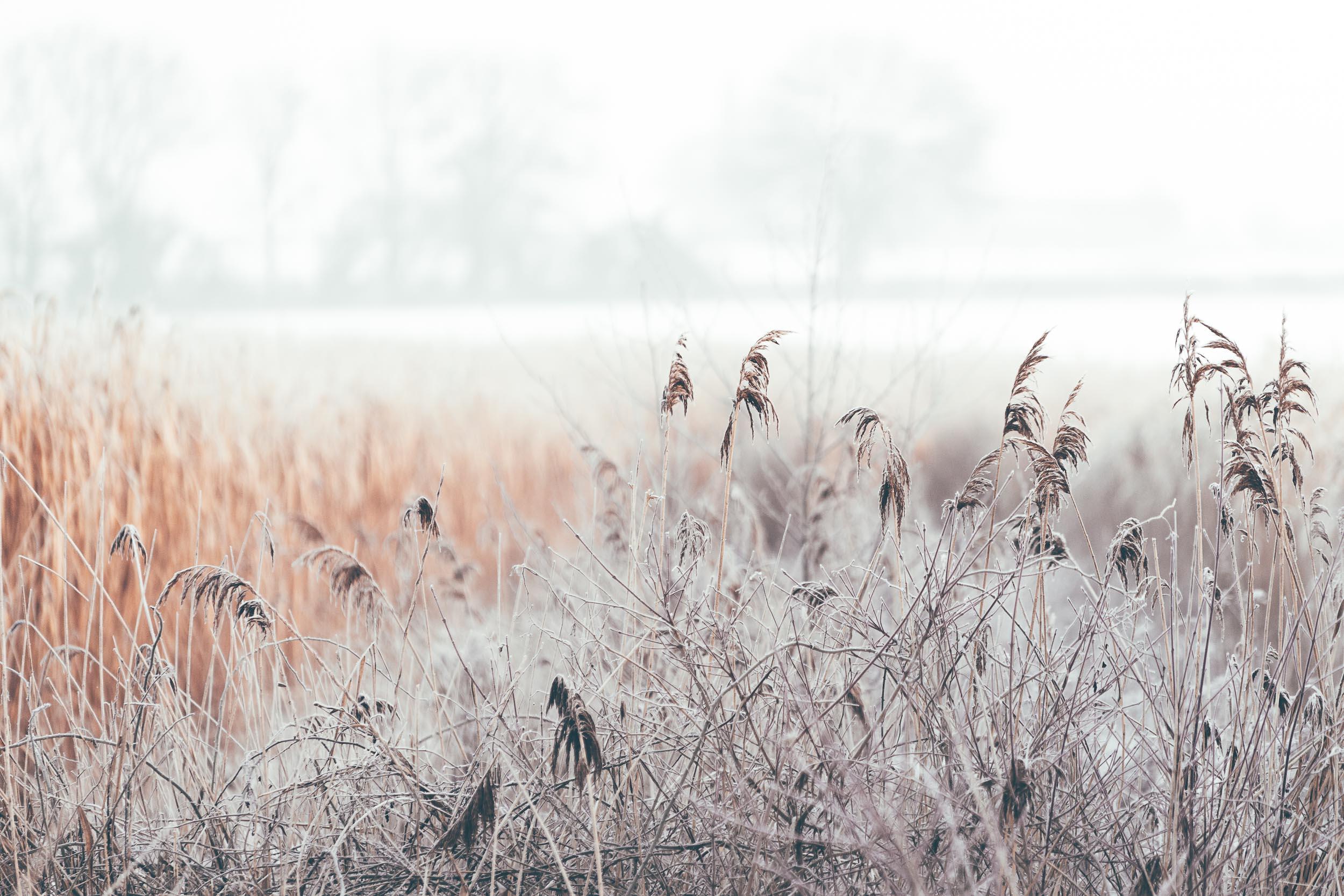 Frozen Harvest