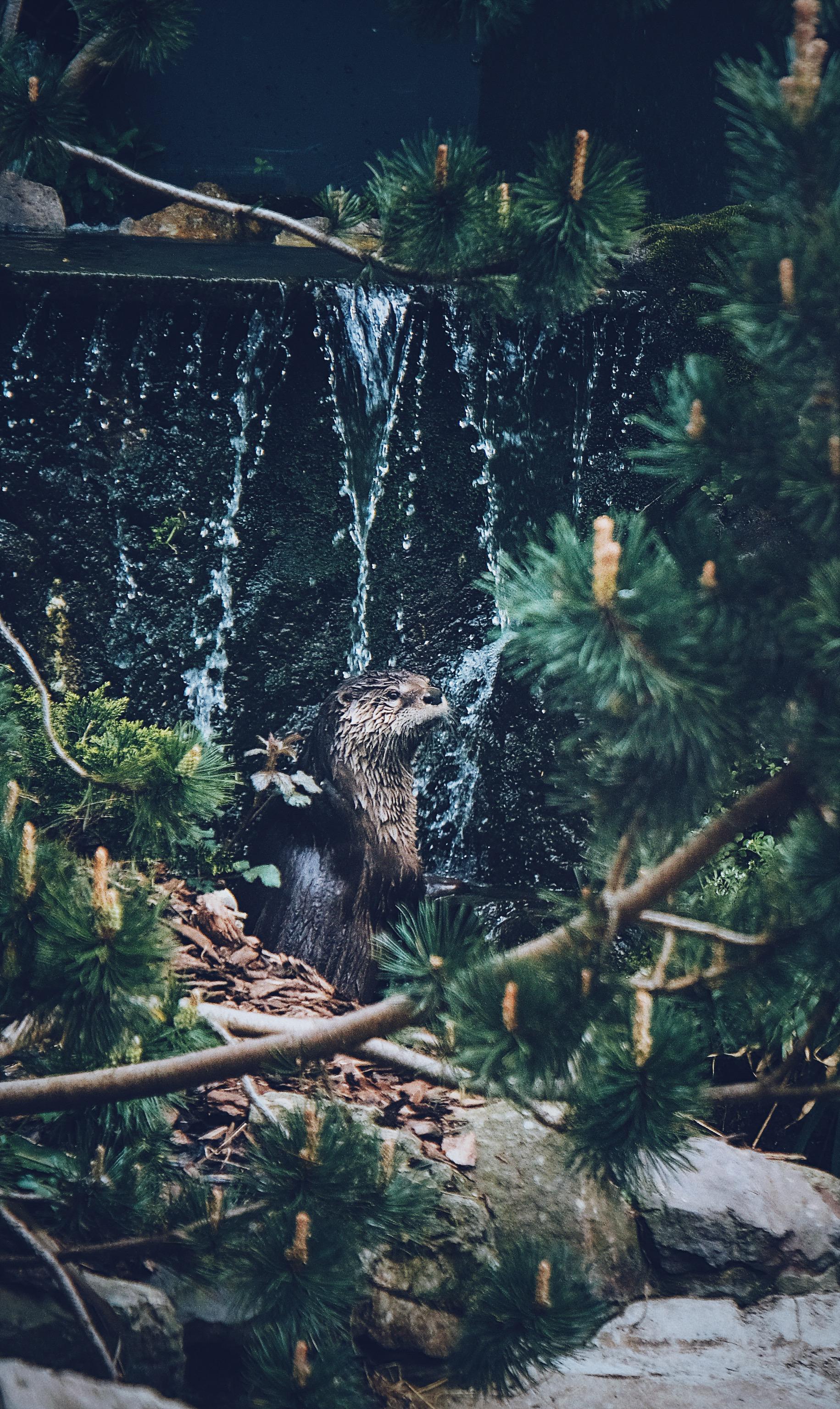 Otter Shower (18-135)