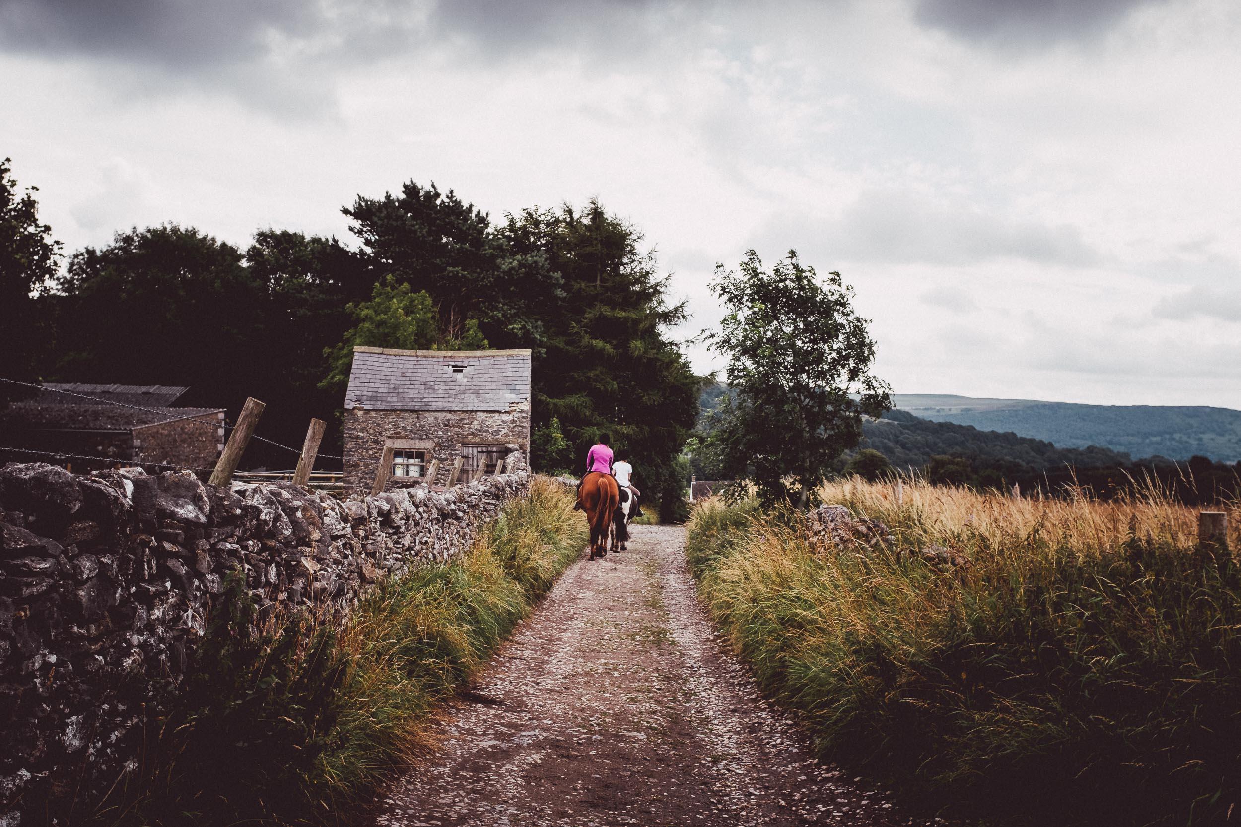 Horses on the Lane