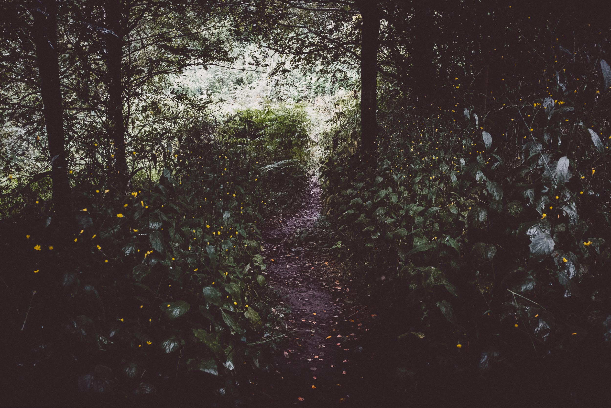 Through the Marsh Marigold
