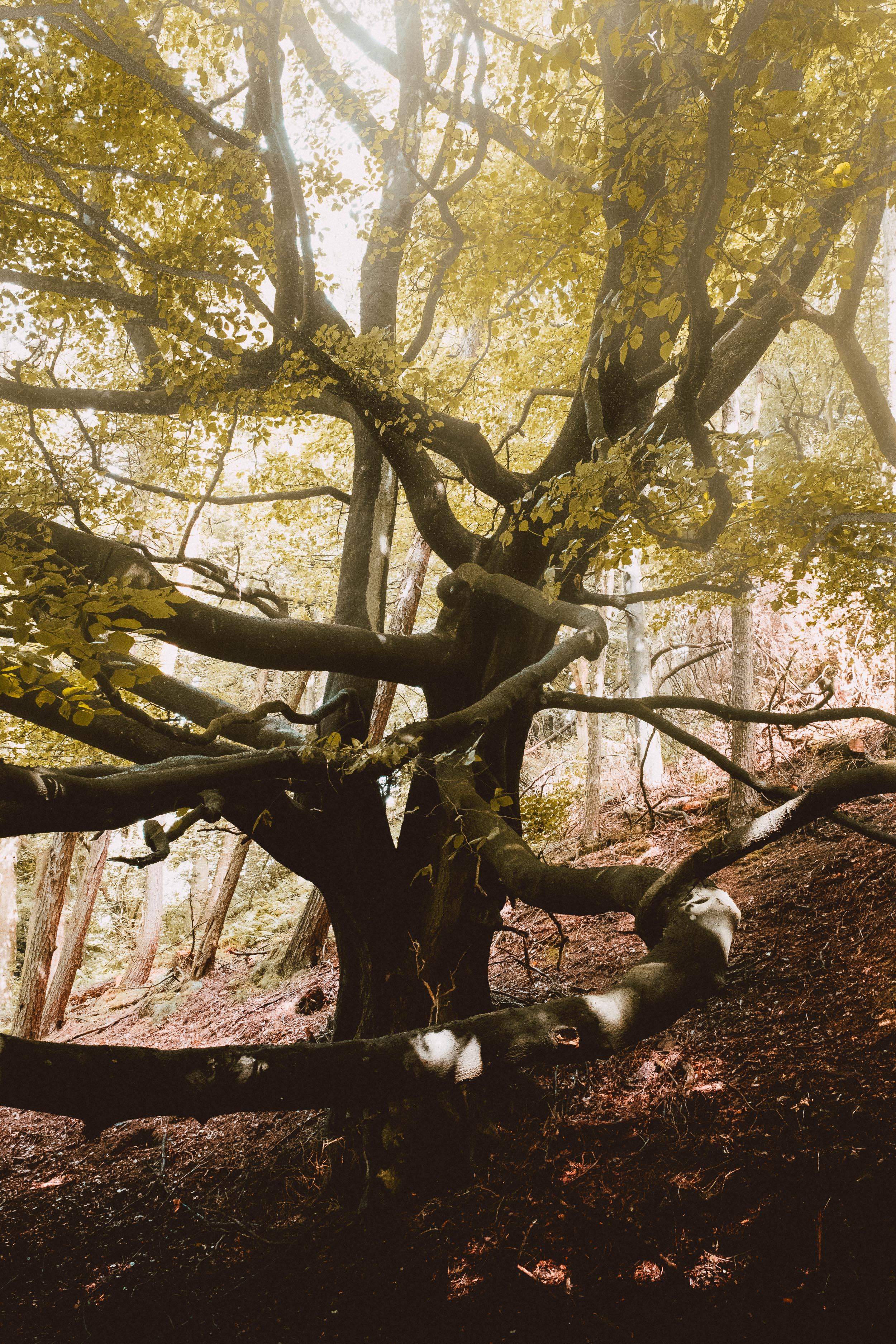 Branch Hugs