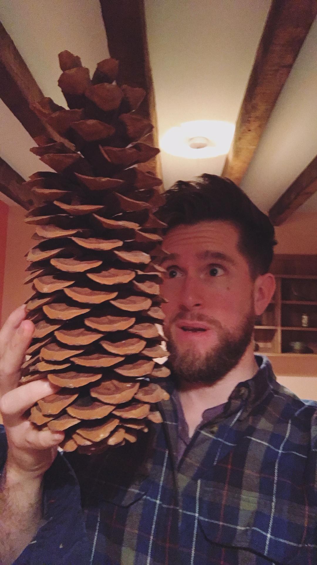 Giant Pine Cone